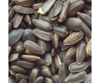 15kg - Bamfords Black Sunflower Seeds