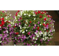 60 Litre - Hanging Basket and Patio Compost