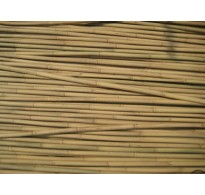 210cm (7ft) Bamboo Canes 12/14mm