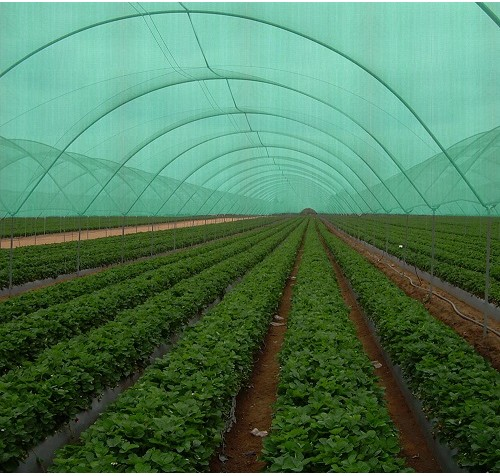 1m Wide Heavy Duty  Shade Netting (75%) / Garden Windbreak 180gsm